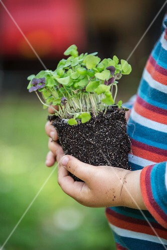 A child holding a basil plant