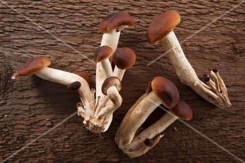 Pholiota mushrooms on a rustic wooden surface