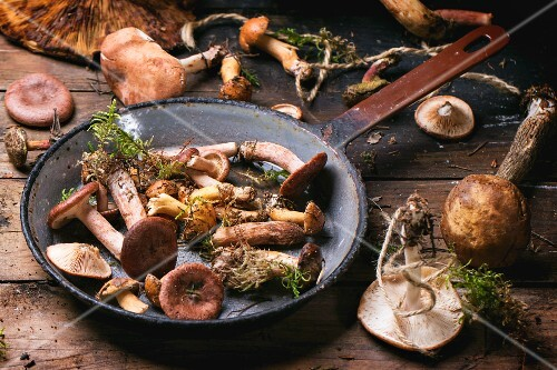 Fresh wild mushrooms in an old pan on a wooden table