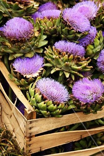A crate of artichoke flowers