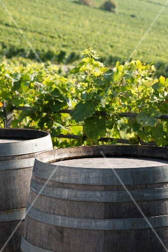 Barrels of wine with a vineyard in the background