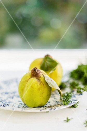 Quinces on a plate in front of a window