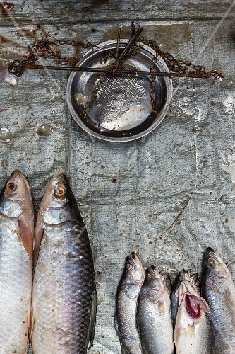 Fresh fish and a weighing scale at the market in Yangon, Myanmar