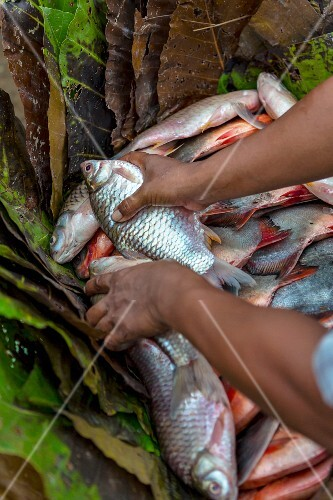 Fresh fish being wrapped in leaves