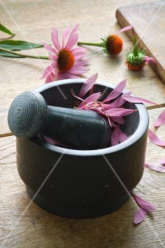 Echinacea Purpurea petals in a mortar