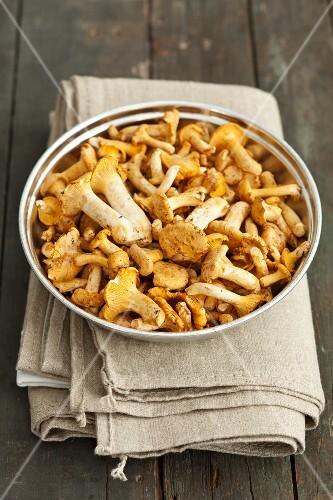 Chanterelle mushrooms in a metal bowl