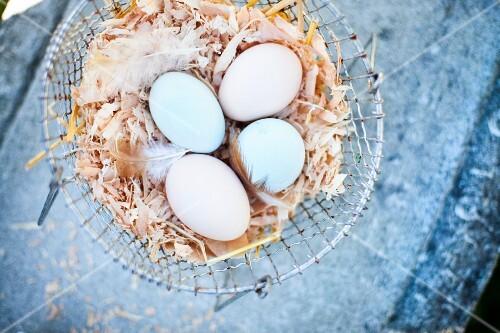 Araucana eggs in a wire basket