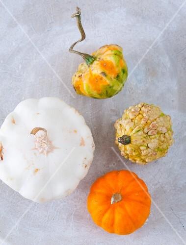 Various pumpkins (seen from above)