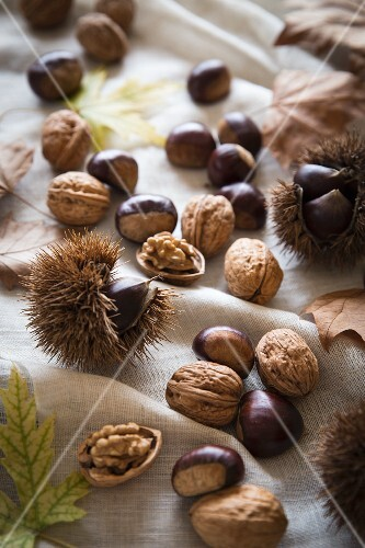 Chestnuts and walnuts on autumnal leaves