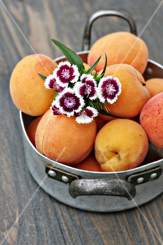 Fresh apricots in a vintage pot with a bunch of daisies