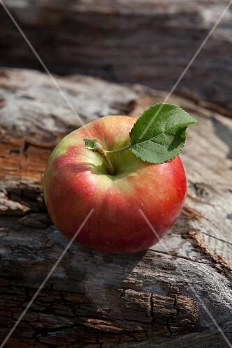 An apple on a log