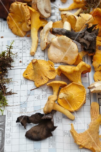 Fresh wild mushrooms on newspaper