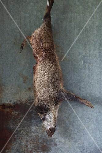A hanging wild boar