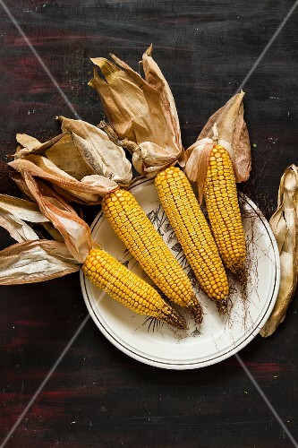 A plate of corn cobs