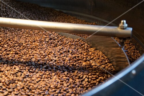 Roasting Coffee Beans in a Coffee Plant