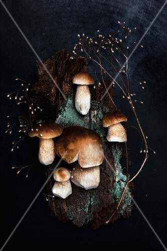 Fresh porcini mushrooms and a dried stock of seeds on a piece of bark covered in lichens on a dark surface