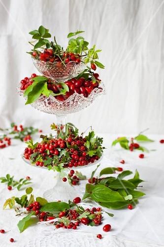 Rosehips, Cornelian cherries and hawthorn berries in crystal bowls