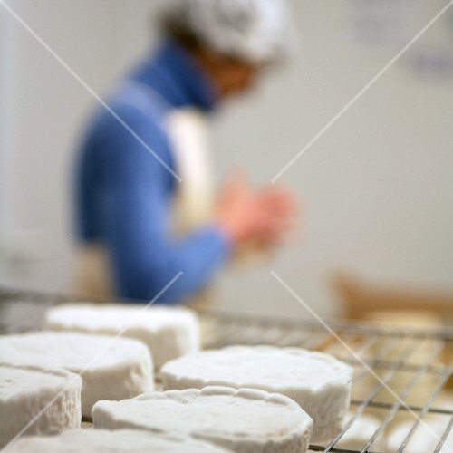 Camembert on a wire rack in a cheese dairy