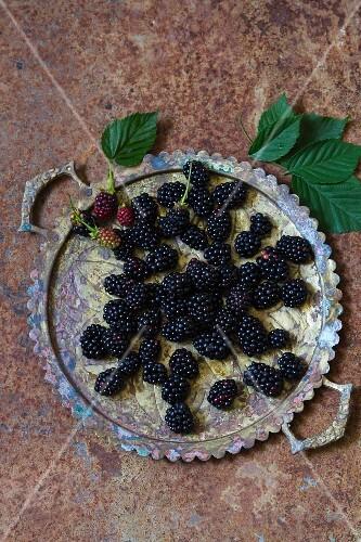 Fresh blackberries on a metal tray