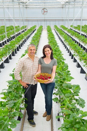A couple with freshly picked strawberries