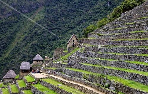 Agricultural terraces in Machu Picchu, the lost city of the Incas, rediscovered by Hiram Bingham in 1911, Peru, South America