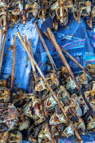 Grilled frogs on bamboo sticks (Vientiane, Laos)