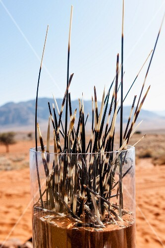 'Dune Camp' in Wolwedans, NamibRand Nature Reserve, Namibia, Africa – porcupine spikes in a glass as decoration