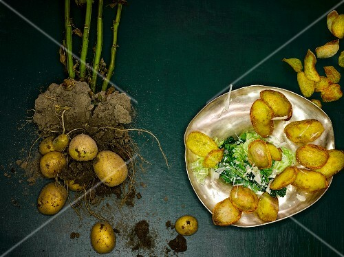 Stuffed potato crisps on creamy savoy cabbage