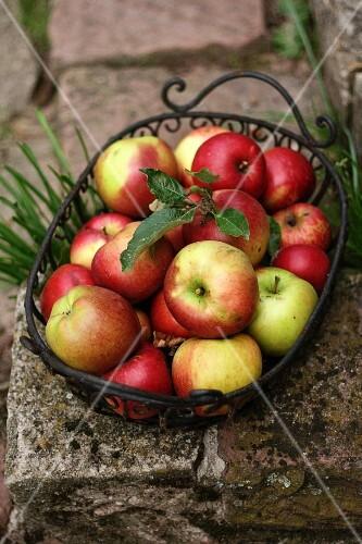 Fresh apples in a metal basket