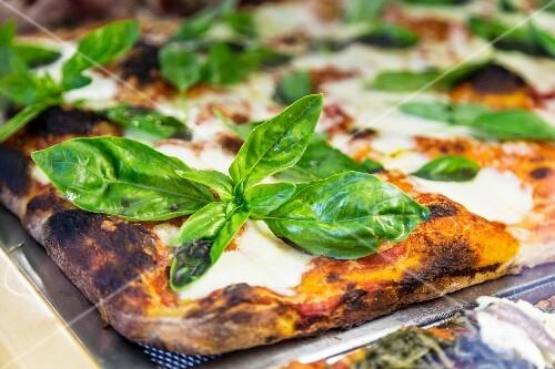 A saffron pizza with mozzarella and basil (close-up)