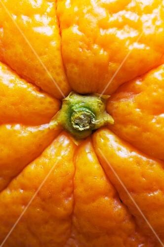 Close-up of navel orange