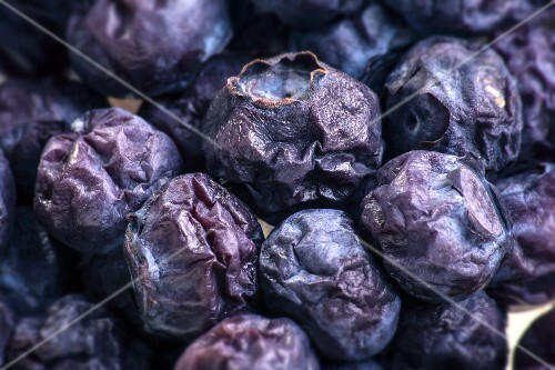 Mouldy blueberries (close-up)