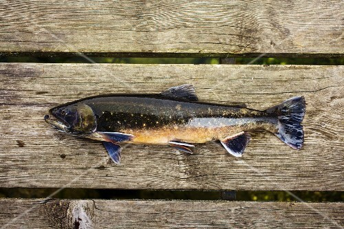 Sea trout on a wooden board