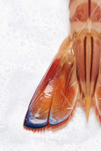 A king prawn (detail)