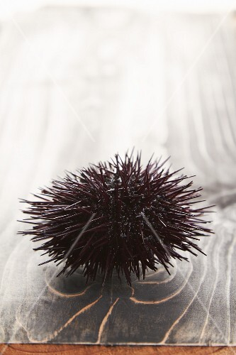 A sea urchin