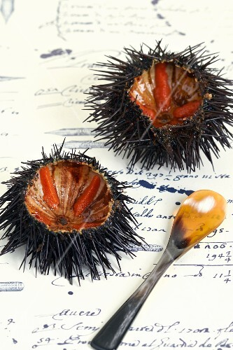 Two sea urchins with a spoon
