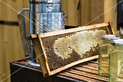 A honeycomb and beekeeping equipment