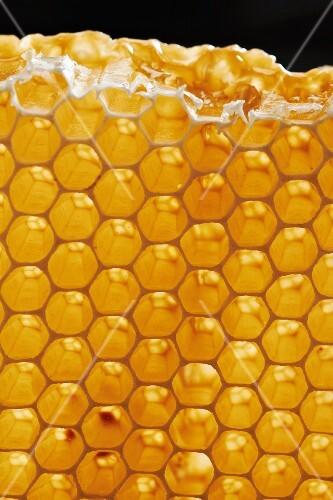 A golden honeycomb