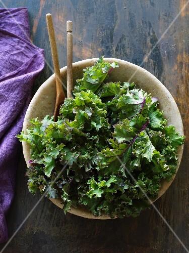A bowl of purple kale (rare)