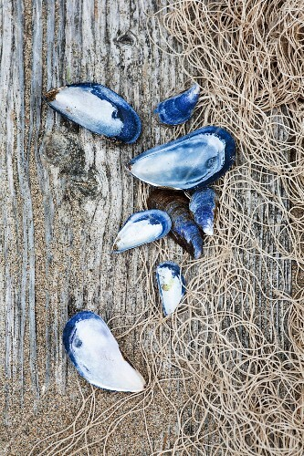 Shells and a fishing net on a rustic wooden surface