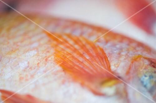 A red snapper (detail) at a fish market in Bangkok, Thailand