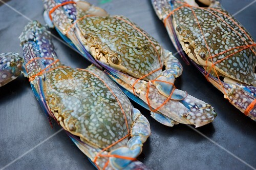 Bound blue crabs at a market in Bangkok, Thailand