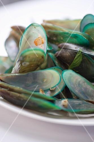 A plate of fresh mussels (Bangkok, Thailand)