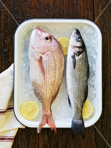 A red snapper and a sea bass on ice cubes with lemon slices in an enamel pan