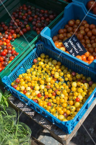 Cherry tomatoes in crates at the Torvehallerne market in Copenhagen