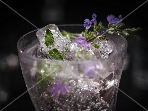 An exotic drink made with cat nip and ice cubes (edible flowers and petals frozen in ice cubes)