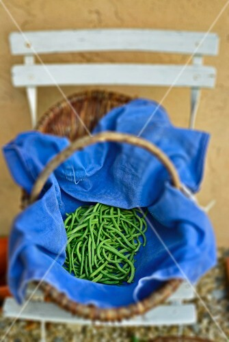 A basket of freshly harvested green beans on a folding chair