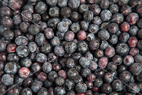 Fresh blueberries (full frame)