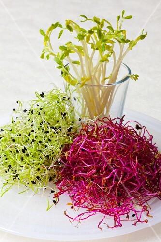 Assorted fresh edible shoots