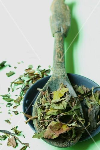 Dried white tea leaves